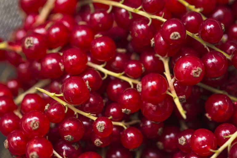 Redcurrant in meals